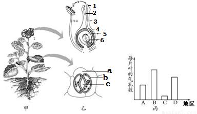 子宫结构简图图片