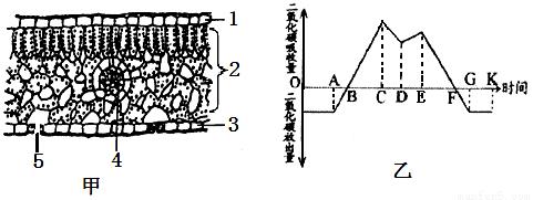 叶子的认识结构图