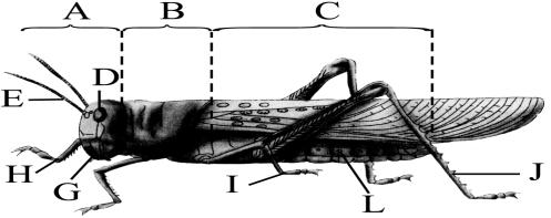 初中生物 题目详情  下图是蝗虫结构示意图,据图完成下面问题.