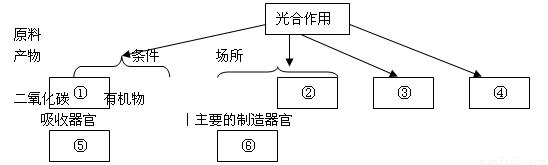 肾单位结构包括a.