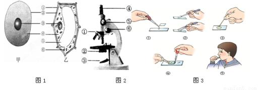 如图分别为细胞结构(图1)和显微镜结构示意图(图2),请据图回答