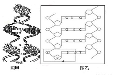 八年级生物结构示意图