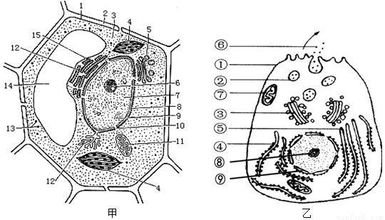 (2)若甲表示低等植物细胞,则还应有的结构是 ;该结构与细胞的 有关.