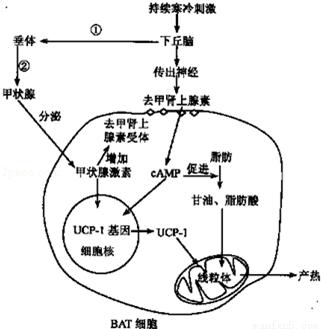 在下列细胞结构中.不具有膜的是( )①线粒体 ②核糖体