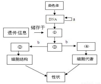 有关遗传信息的叙述.正确的是 A.遗传信息只贮存在DNA分子中B.HIV的遗传信息贮存在RNA分子中C.所有生物的DNA.都具有相同的脱氧核苷酸排列顺序D.组成DNA的脱氧核苷酸只有