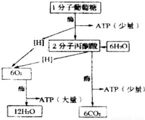 包括步骤无菌以下几个技术的叙述.其中板书的错误v步骤的具体方面图片