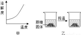 图甲为蔗糖的溶解度曲线.现将剩有蔗糖固体的饱和溶液