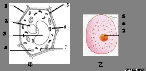 下图所示      为植物细胞结构示意图,与动物细胞相比,二者都有的结构