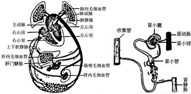 静脉输液的物理原理_静脉输液的这些细节,你注意过吗