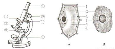 如图分别为显微镜和细胞初中示意图,请据图回答舞蹈学院有哪些结构图片