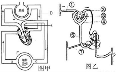 肾单位是肾脏结构和功能的基本单位.