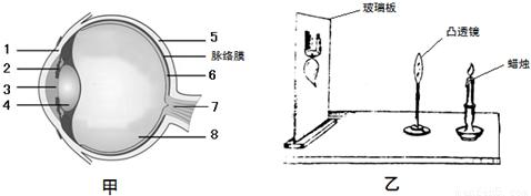 绘出眼球的构造图(甲图),并根据眼球的结构特点,进行了模拟成像实验.