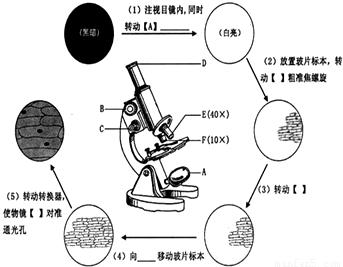 """解答:解:观察""""洋葱表皮细胞""""时,(1)首先是对光,眼睛注视目镜内,同时"""