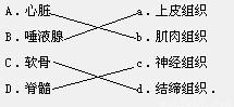 构成左侧所列器官的主要组织是哪一类.用线连接起来.A.心脏 a.上皮组织B.唾液腺 b.肌肉组织C.软骨 c.神经组织D.脊髓 d.结缔组织. 题目和参考答案 精英家教网