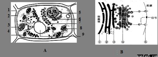 植物细胞和动物细胞中储存能量的多糖分别是