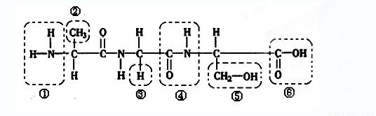 下列是某化合物的结构简图,据图回答:(14分)
