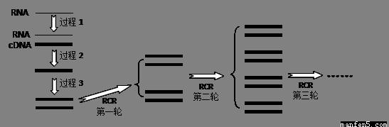 (1)传统pcr技术的原理是_________,过程中低温退火的含义是