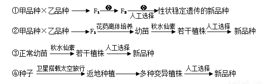 (3)第③种育种方法中使用了秋水仙素,它的作用机理是抑制