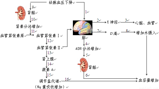 (答全给分)。 突触是神经元之间相互接触并进行信息传递的关键部位,在神经系统正常活动中起着重要的调节控制作用,根据对下一级神经元活动的影响,可以把突触分为兴奋性突触和抑制性突触。下面图1 和图2 是分别表示这两种突触作用的示意图。  (4)递质合成后首先贮存在________内,以防止被细胞内_______的破坏。当兴奋抵达神经末梢时,递质释放,并与突触后膜上的_______结合,在图1 中,则引起Na