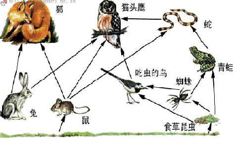 (1)请仔细看图并根据图中动物间的食物关系,写出至少三条食物链.