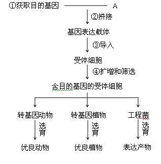 克隆人的过程及原理与基因工程_失败的克隆人