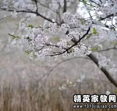 什么朽株成语_成语故事简笔画