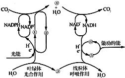 根据植物光合作用和呼吸作用的原理