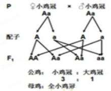 a互补筛选的原理_望远镜原理