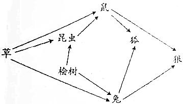 最原始的水稻杂交原理_杂交水稻原理图解