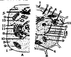 肺炎双球菌的转化实验实验原理_肺炎双球菌的转化实验