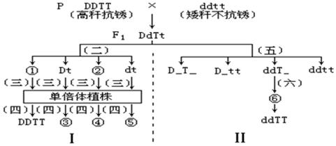 单倍体育种的原理染色体结构变异_染色体变异及育种笔记