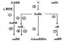 由aabb培育aabb的原理是_无籽西瓜的培育原理
