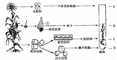 培养霉菌的目的 原理 步骤_霉菌白带图片